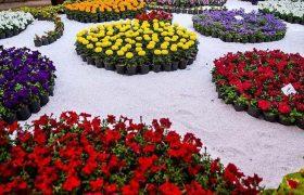 نظم دهی پرچین ها و گلکاری باغچه های شهر در آستانه پاییز