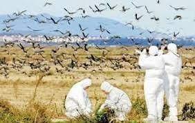 آنفلوآنزای فوق حاد پرندگان، چهار سال گذشته در اصفهان گزارش نشده است